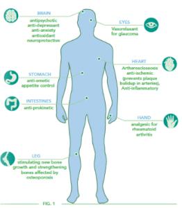 Stress e sistema immunitario: come proteggerlo?